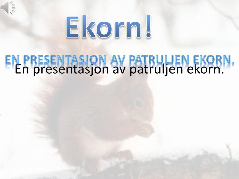 En presentasjon av patruljen ekorn.