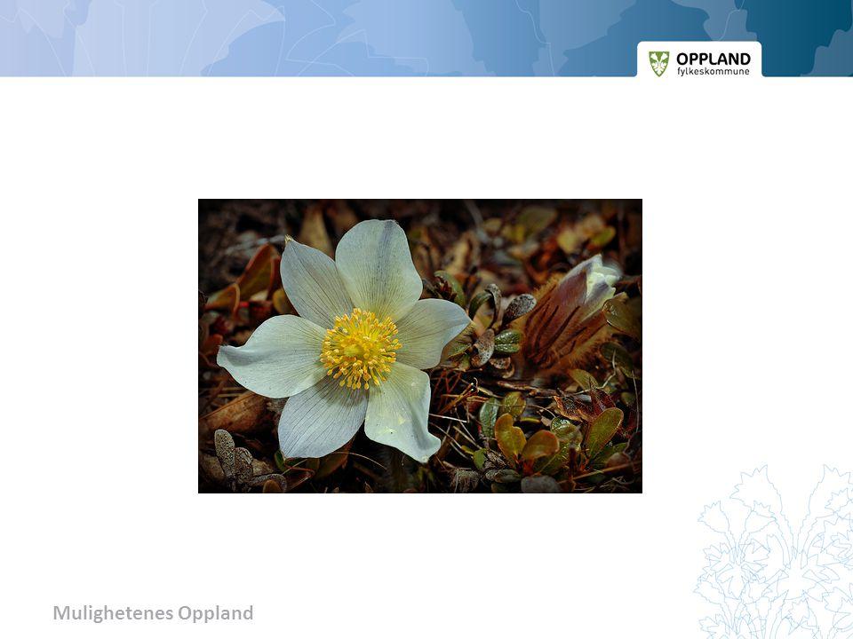 Mogop – fylkets blomst Overgang til nytt tema. Ta spørsmål fra salen. Evt liten pause