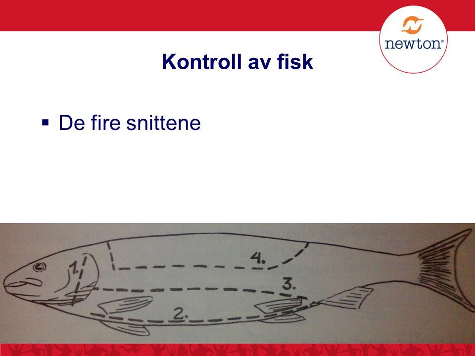 Kontroll av fisk De fire snittene