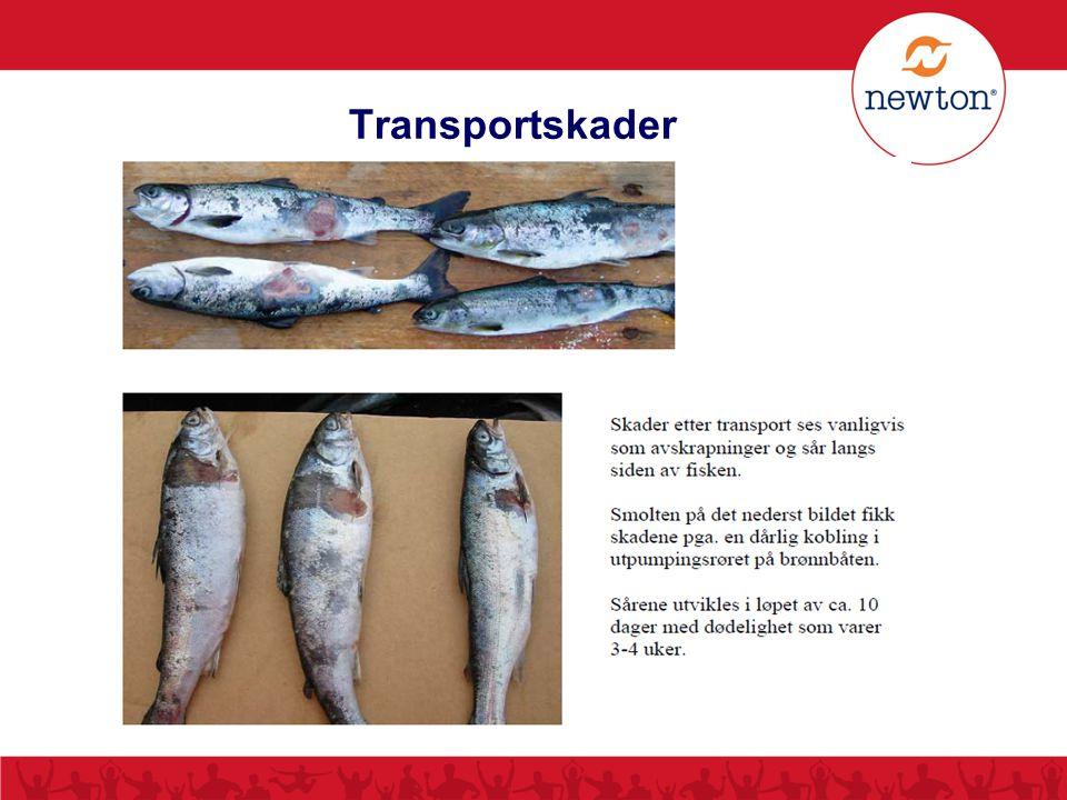 Transportskader