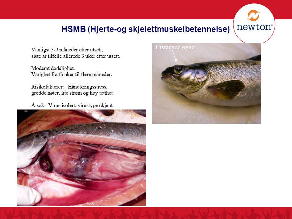 HSMB (Hjerte-og skjelettmuskelbetennelse)