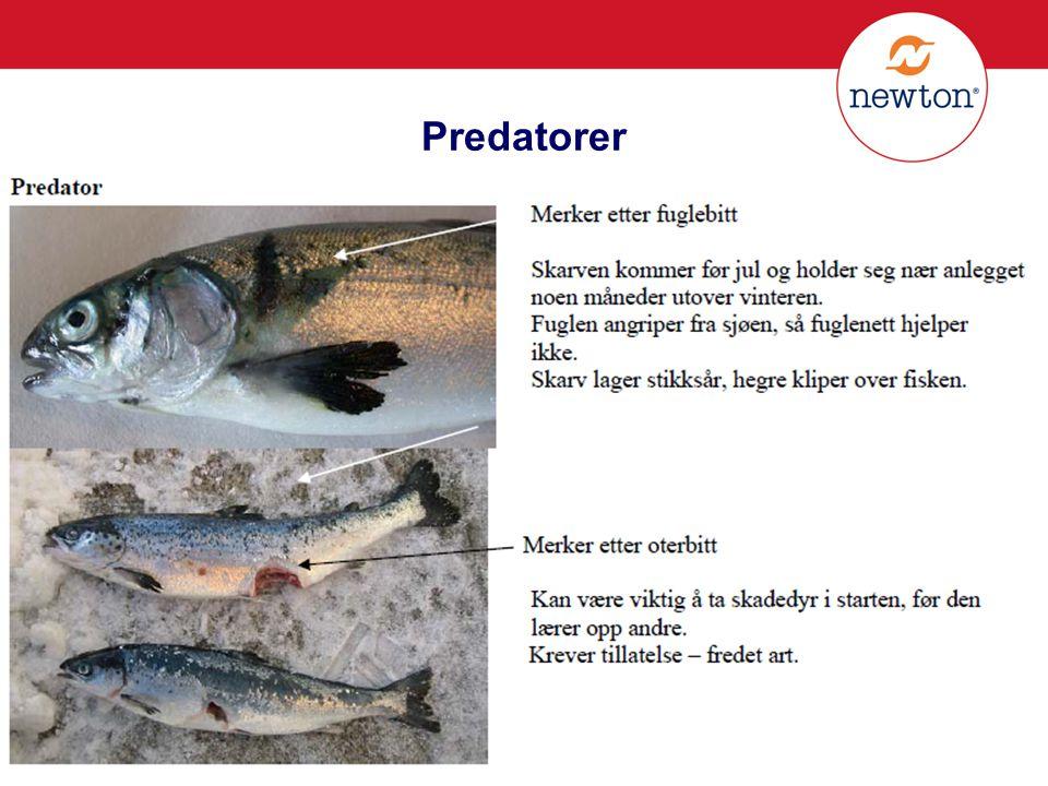 Predatorer