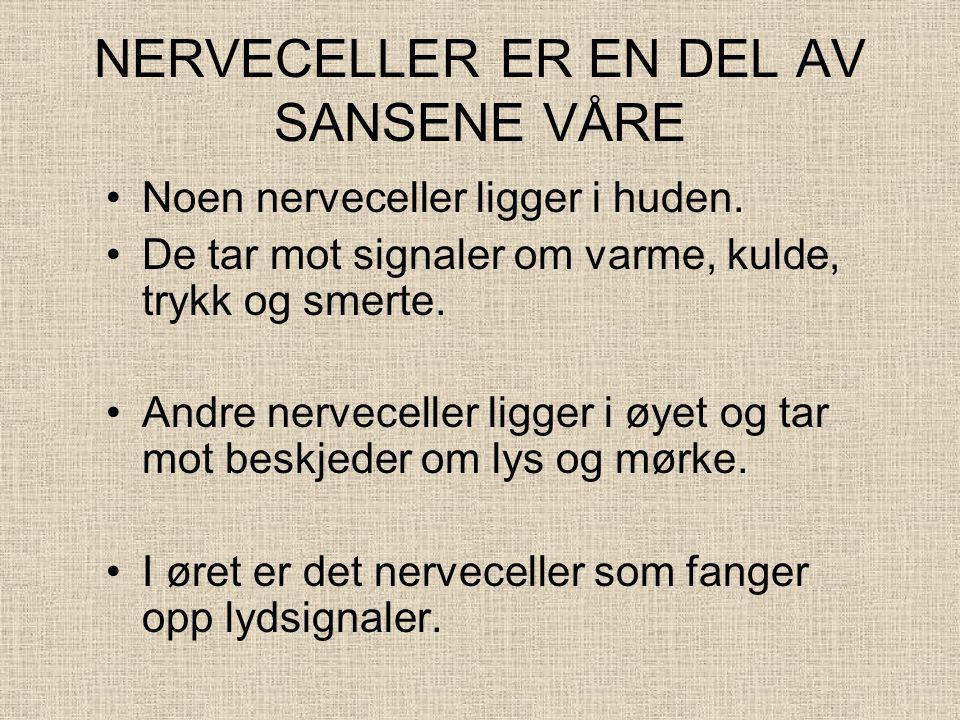 NERVECELLER ER EN DEL AV SANSENE VÅRE