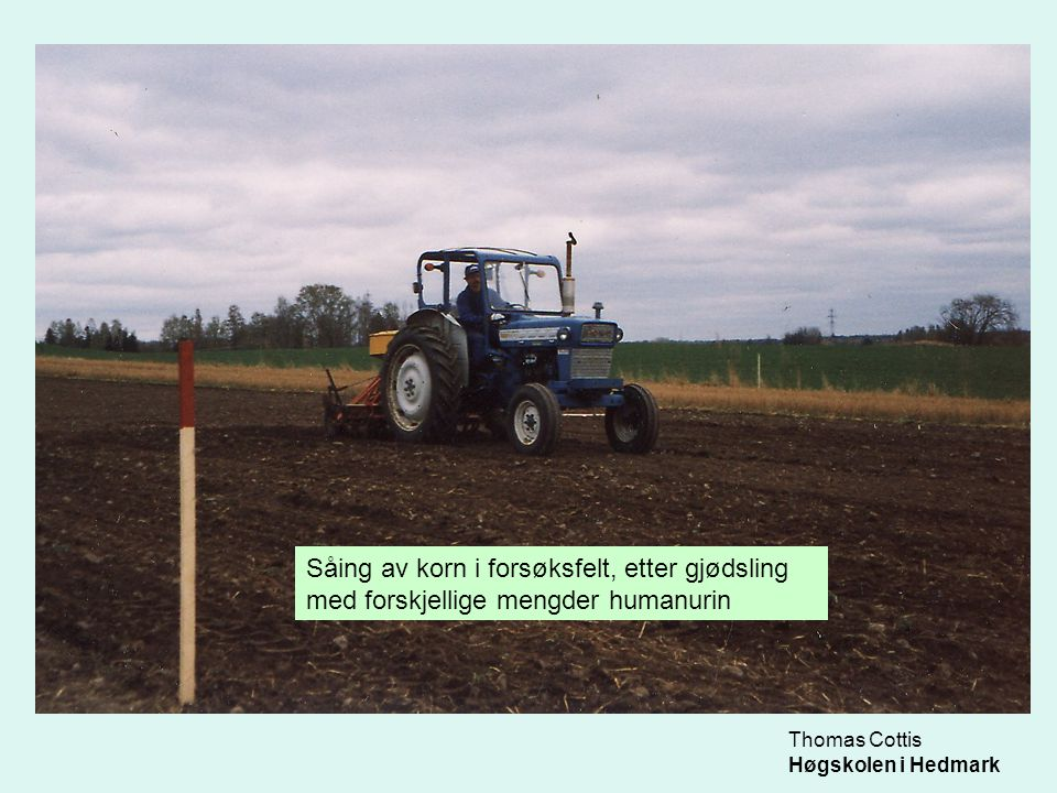 Såing av korn i forsøksfelt, etter gjødsling med forskjellige mengder humanurin