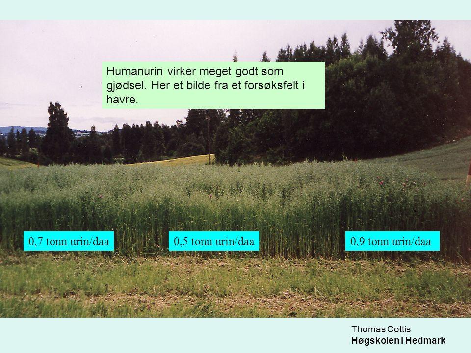 Humanurin virker meget godt som gjødsel