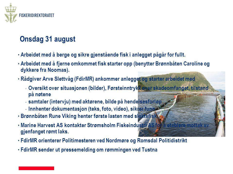 Onsdag 31 august Arbeidet med å berge og sikre gjenstående fisk i anlegget pågår for fullt.