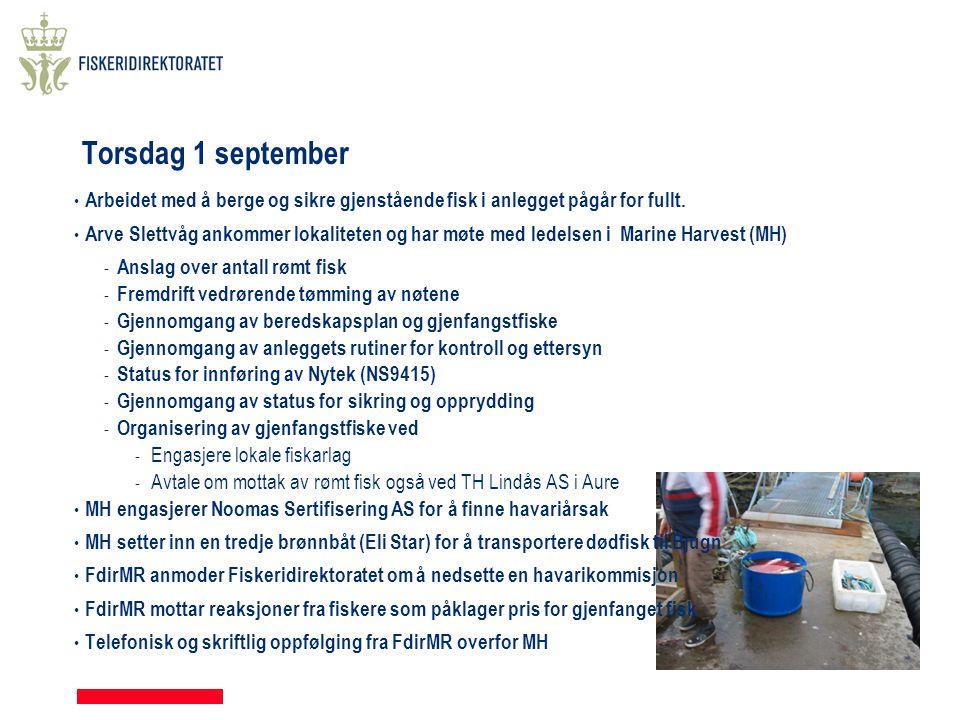 Torsdag 1 september Arbeidet med å berge og sikre gjenstående fisk i anlegget pågår for fullt.