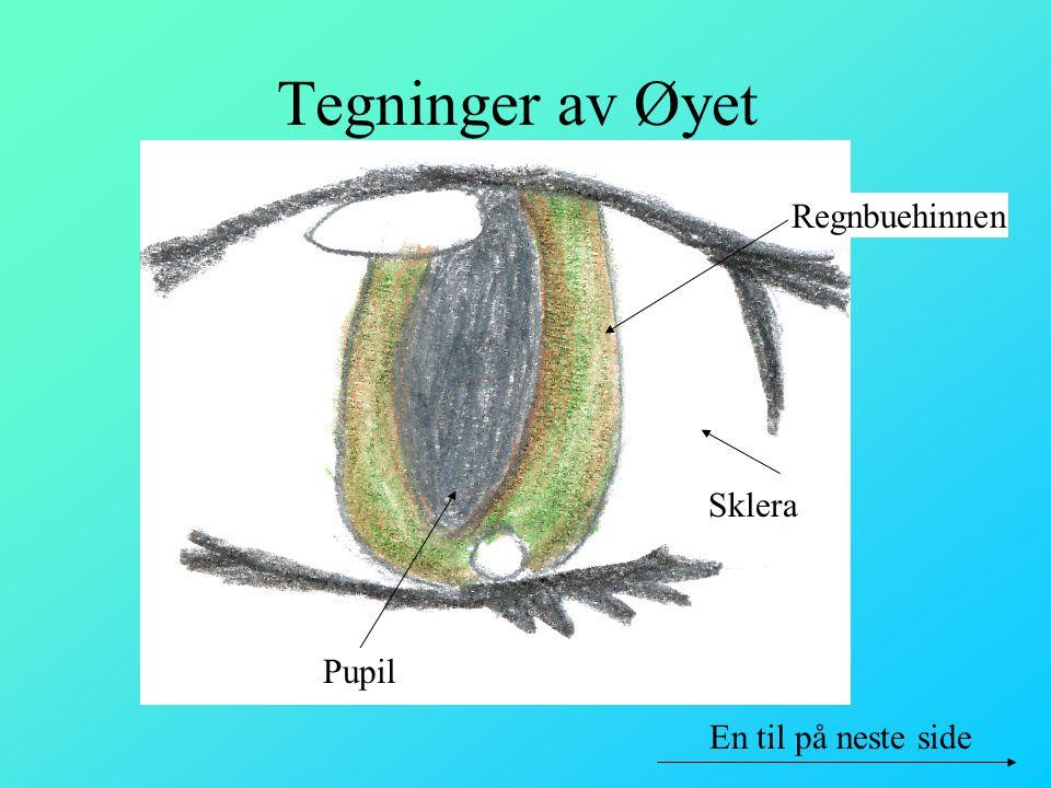 Tegninger av Øyet Regnbuehinnen Sklera Pupil En til på neste side
