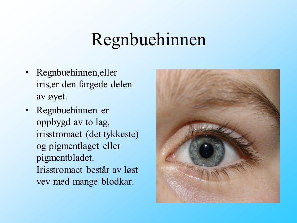 Regnbuehinnen Regnbuehinnen,eller iris,er den fargede delen av øyet.