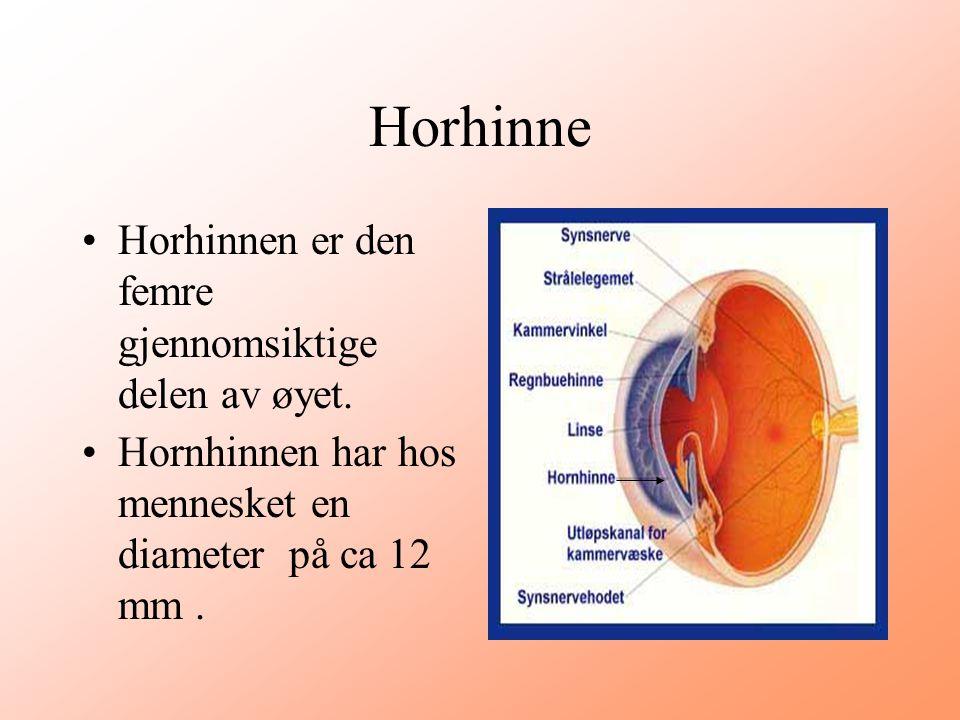 Horhinne Horhinnen er den femre gjennomsiktige delen av øyet.
