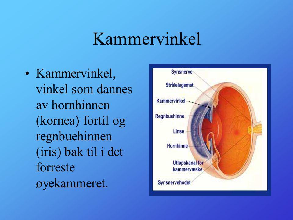 Kammervinkel Kammervinkel, vinkel som dannes av hornhinnen (kornea) fortil og regnbuehinnen (iris) bak til i det forreste øyekammeret.