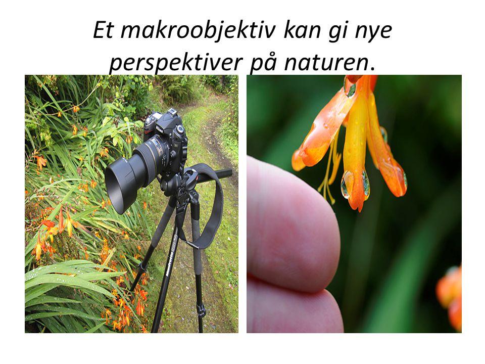 Et makroobjektiv kan gi nye perspektiver på naturen.