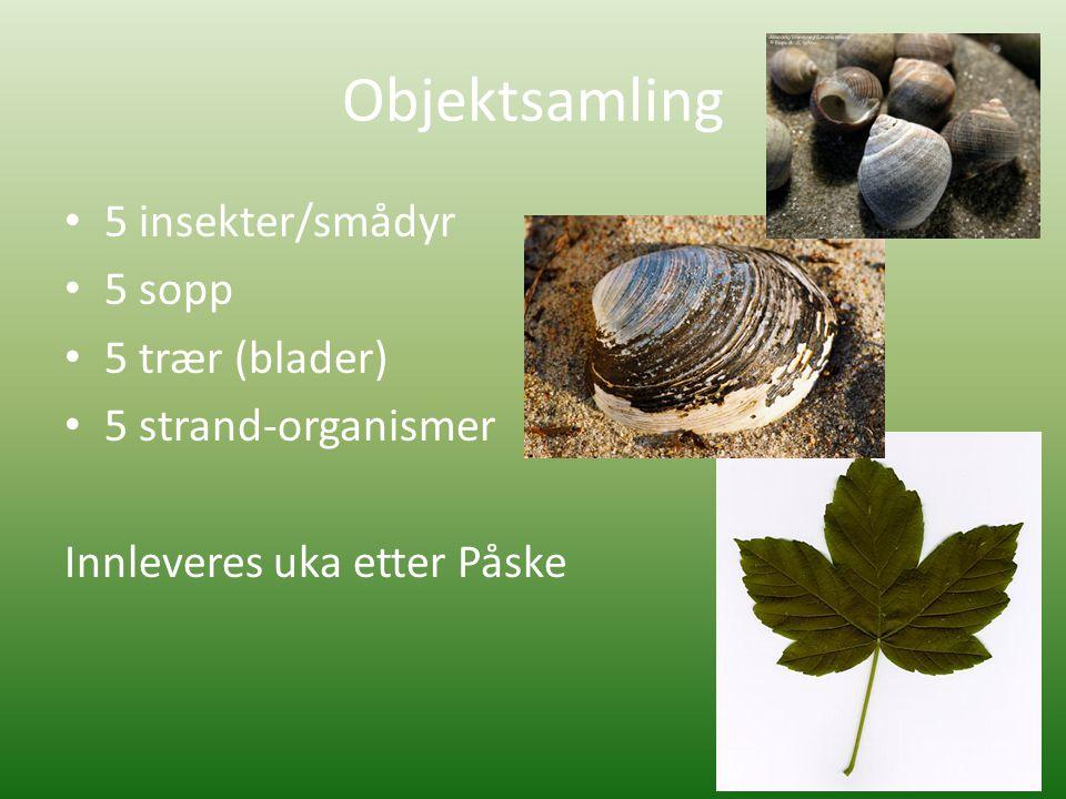 Objektsamling 5 insekter/smådyr 5 sopp 5 trær (blader)