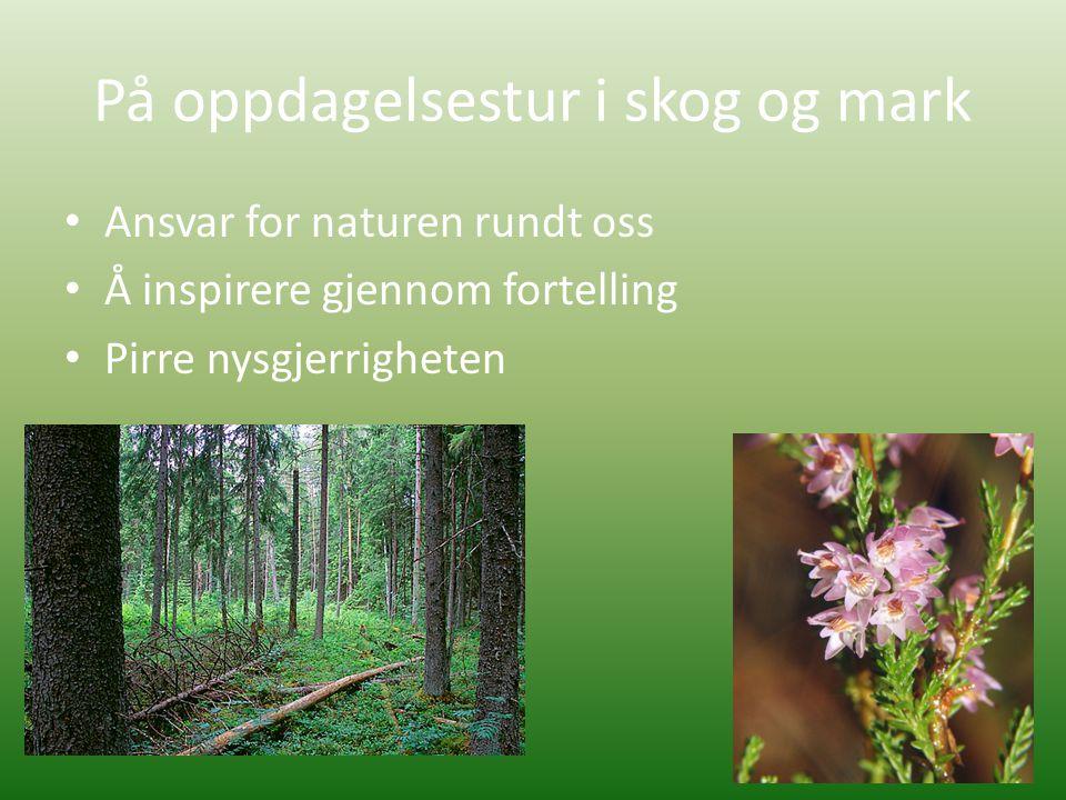 På oppdagelsestur i skog og mark