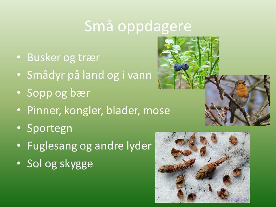 Små oppdagere Busker og trær Smådyr på land og i vann Sopp og bær