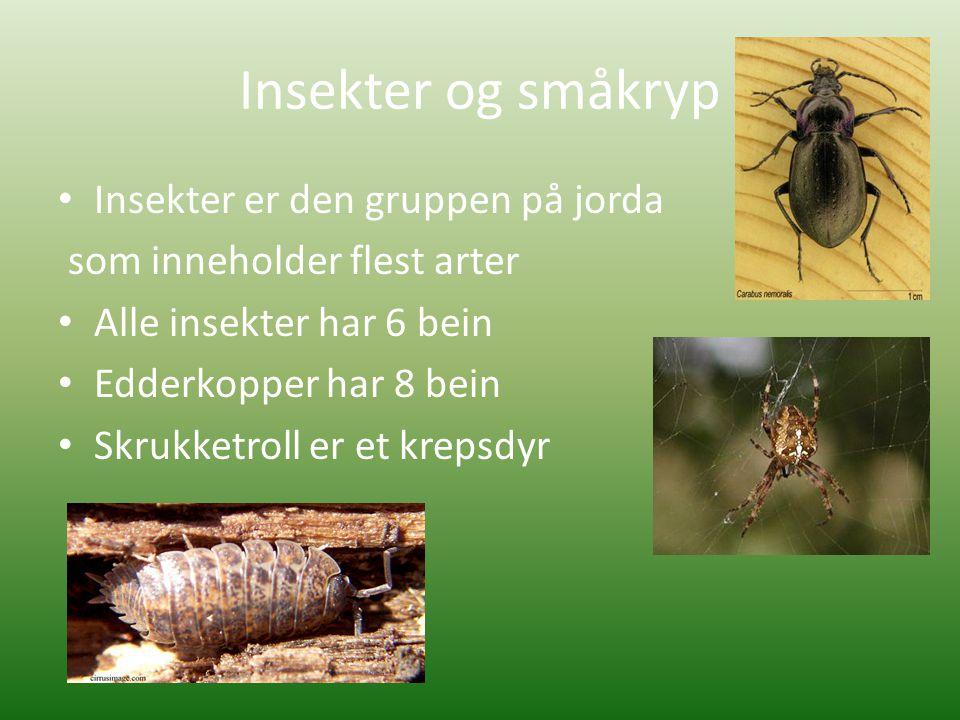 Insekter og småkryp Insekter er den gruppen på jorda