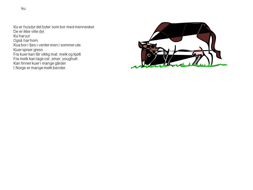 ku Ku er husdyr det byter som bor med mennesker. De er ikke ville dyr. Ku har jur. Også har horn.