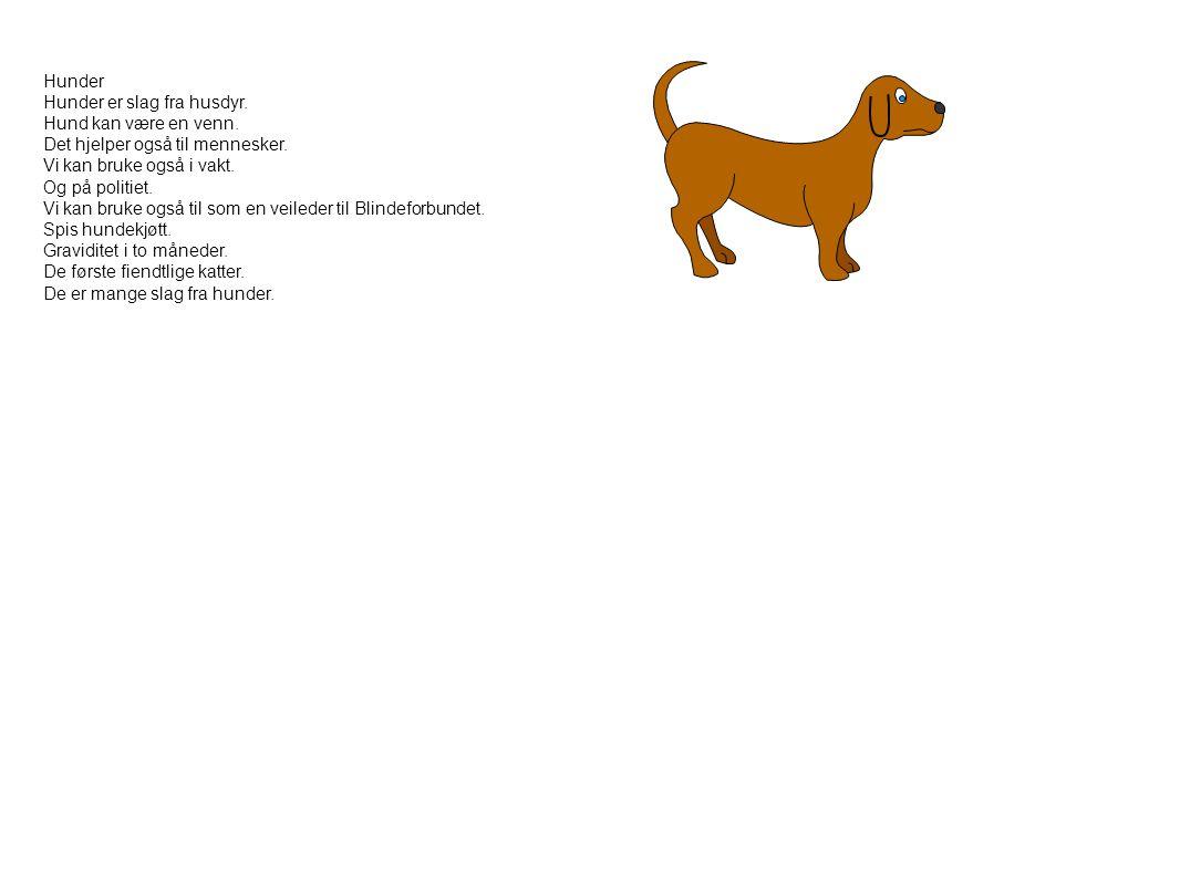 Hunder Hunder er slag fra husdyr. Hund kan være en venn. Det hjelper også til mennesker. Vi kan bruke også i vakt.