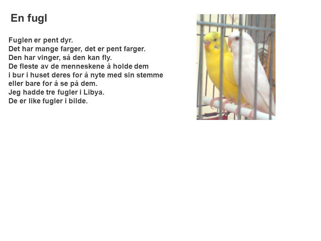 En fugl Fuglen er pent dyr. Det har mange farger, det er pent farger.