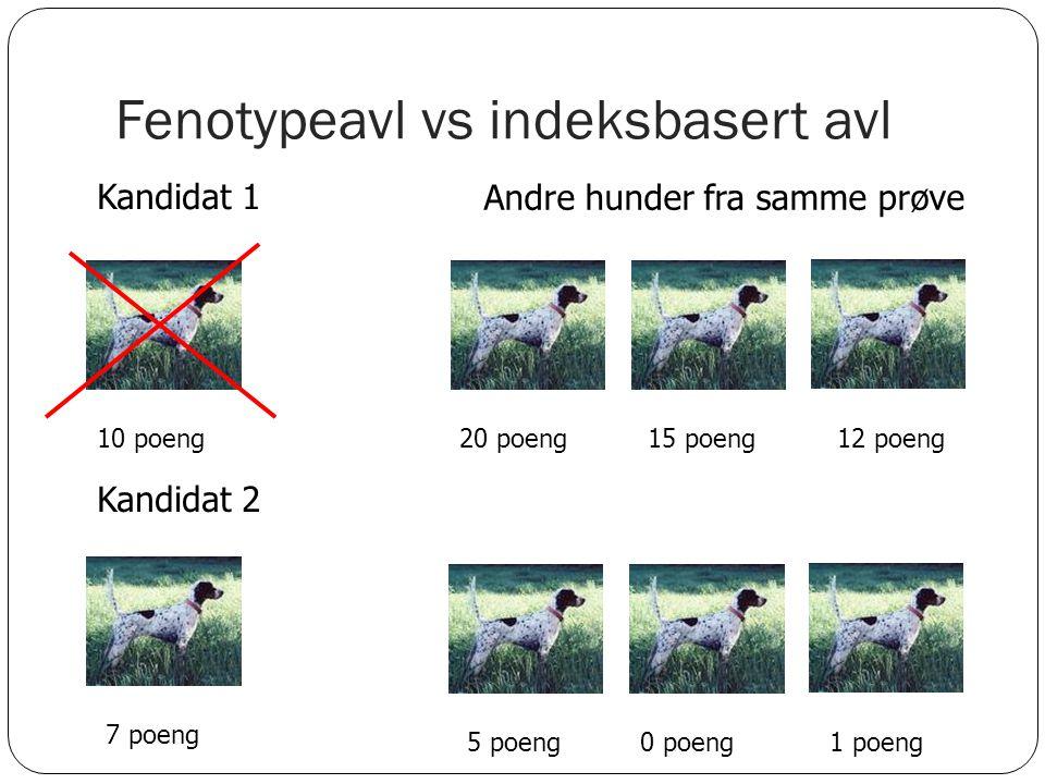 Fenotypeavl vs indeksbasert avl