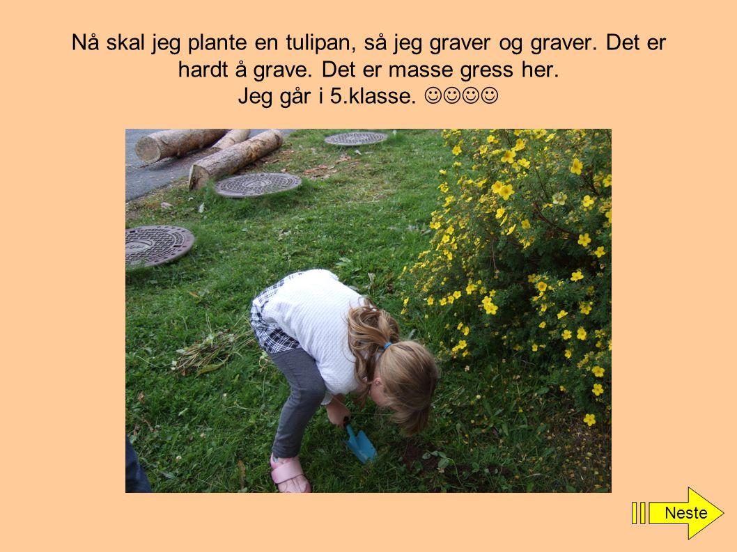 Nå skal jeg plante en tulipan, så jeg graver og graver