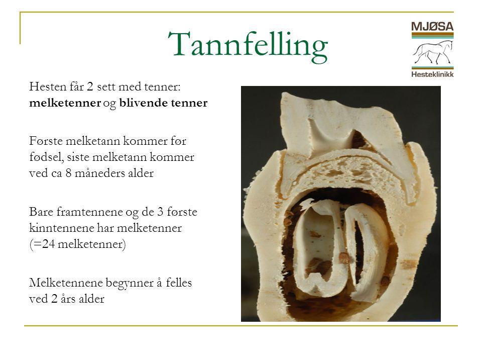 Tannfelling Hesten får 2 sett med tenner: melketenner og blivende tenner.