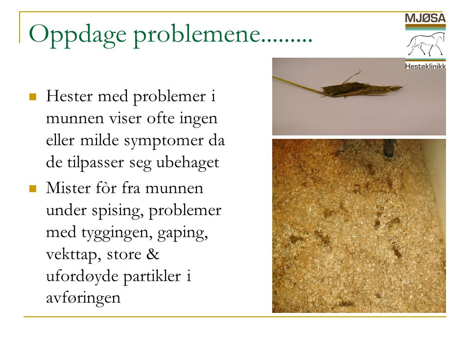 Oppdage problemene......... Hester med problemer i munnen viser ofte ingen eller milde symptomer da de tilpasser seg ubehaget.