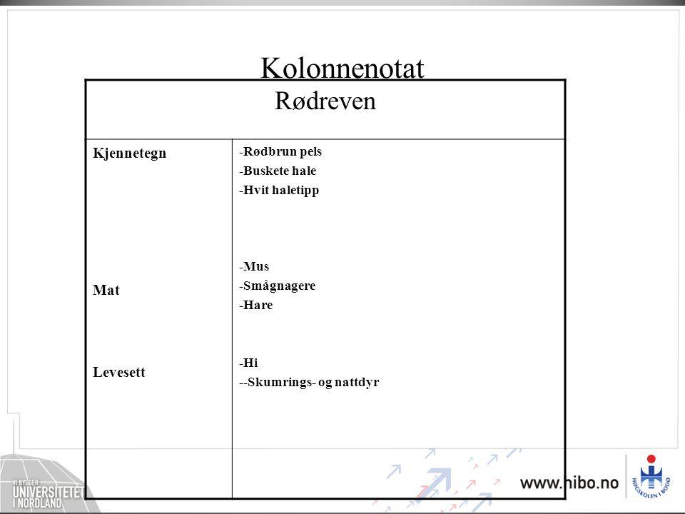Kolonnenotat Rødreven Kjennetegn Mat Levesett -Rødbrun pels