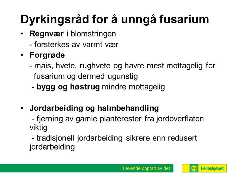 Dyrkingsråd for å unngå fusarium