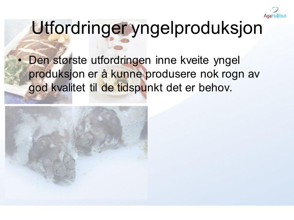 Utfordringer yngelproduksjon