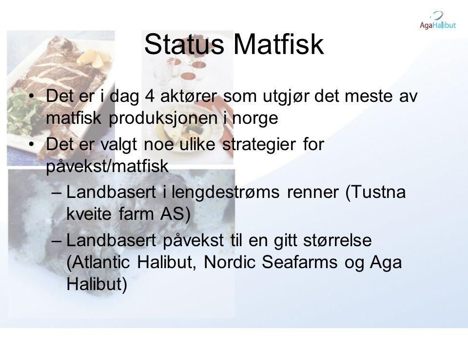 Status Matfisk Det er i dag 4 aktører som utgjør det meste av matfisk produksjonen i norge. Det er valgt noe ulike strategier for påvekst/matfisk.