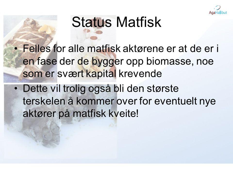 Status Matfisk Felles for alle matfisk aktørene er at de er i en fase der de bygger opp biomasse, noe som er svært kapital krevende.