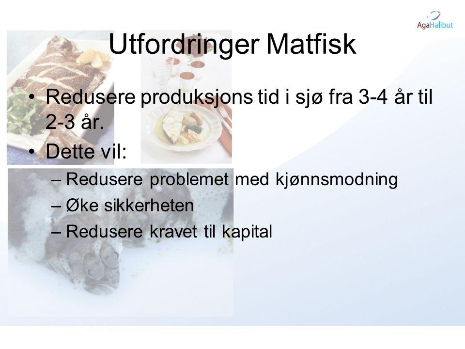 Utfordringer Matfisk Redusere produksjons tid i sjø fra 3-4 år til 2-3 år. Dette vil: Redusere problemet med kjønnsmodning.
