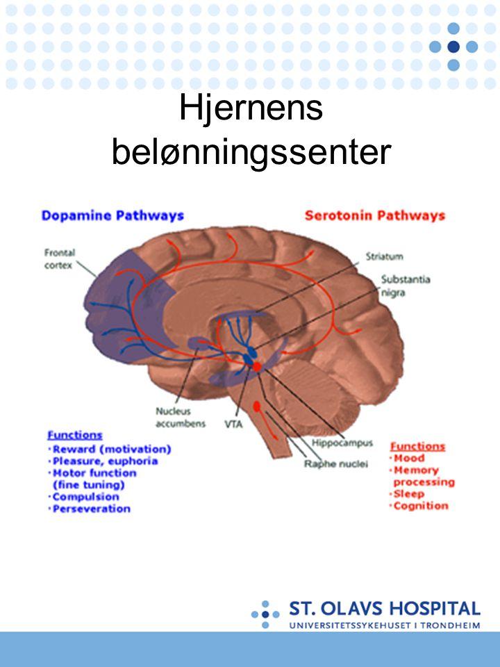 Hjernens belønningssenter