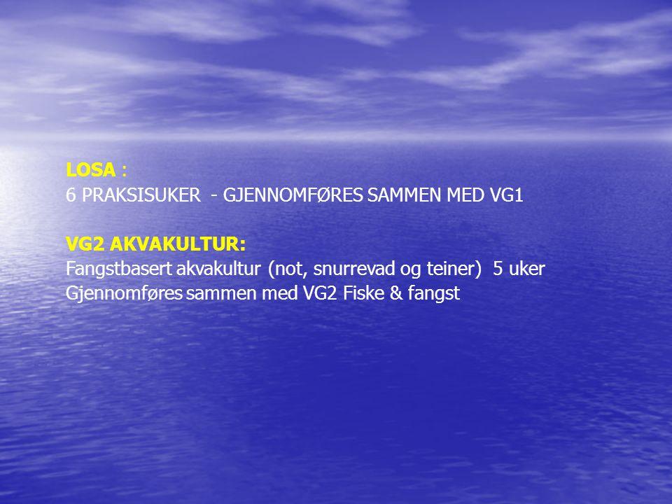 LOSA : 6 PRAKSISUKER - GJENNOMFØRES SAMMEN MED VG1. VG2 AKVAKULTUR: Fangstbasert akvakultur (not, snurrevad og teiner) 5 uker.