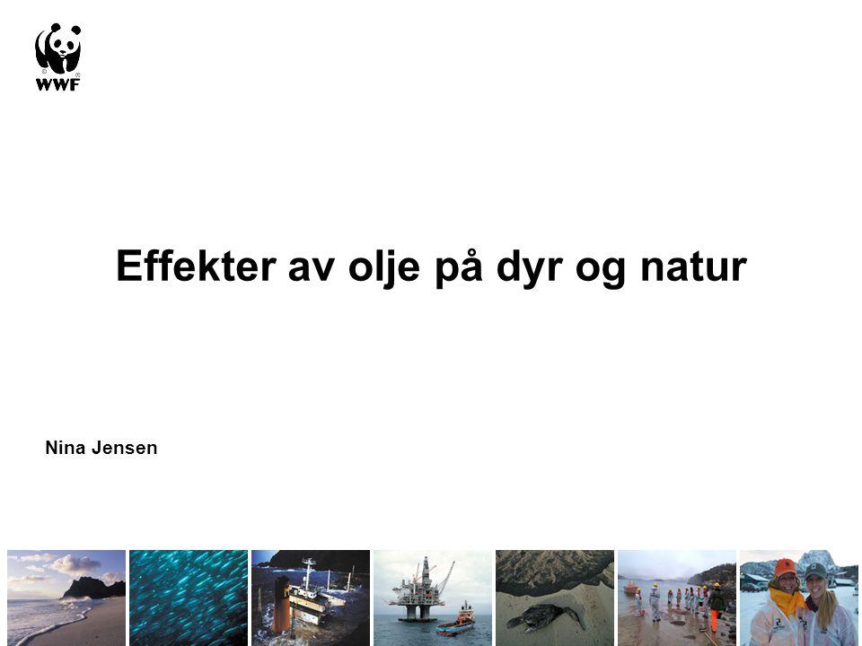 Effekter av olje på dyr og natur
