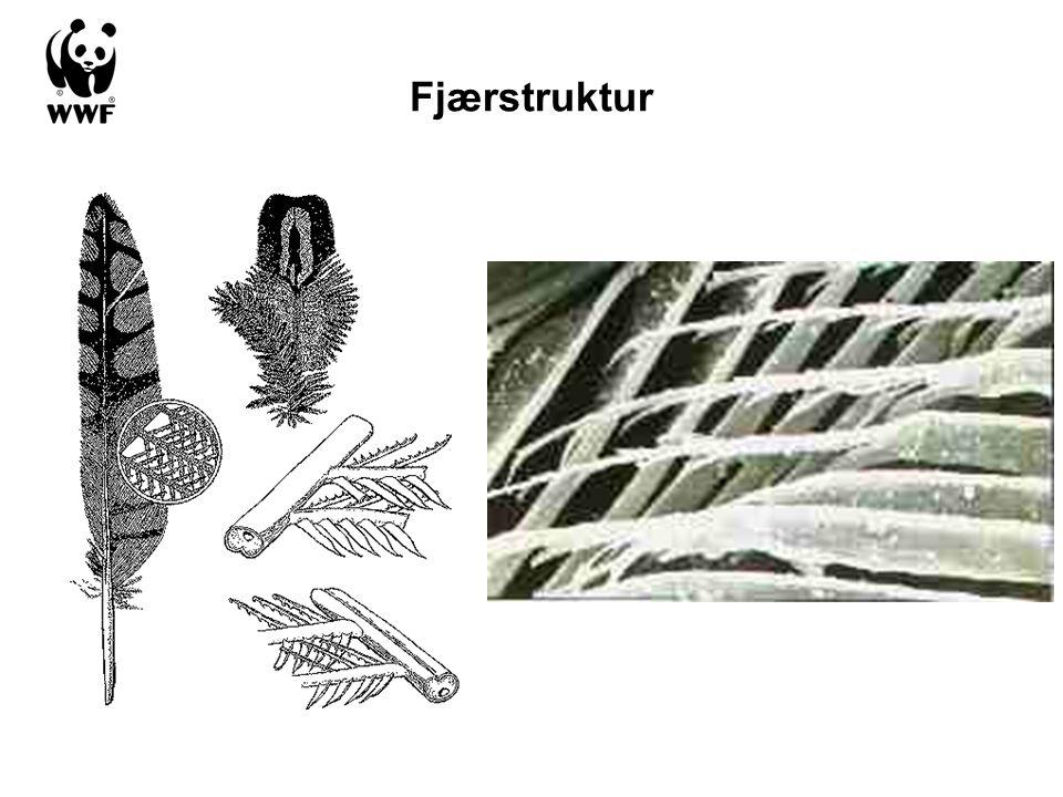 Fjærstruktur