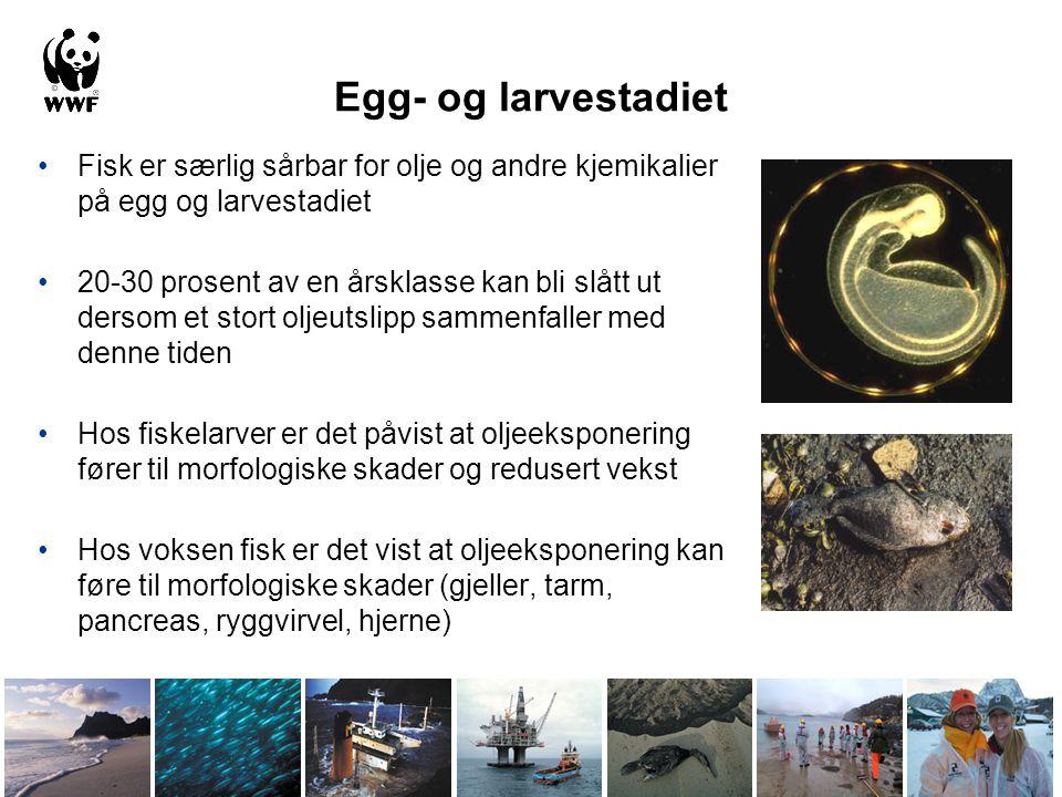 Egg- og larvestadiet Fisk er særlig sårbar for olje og andre kjemikalier på egg og larvestadiet.
