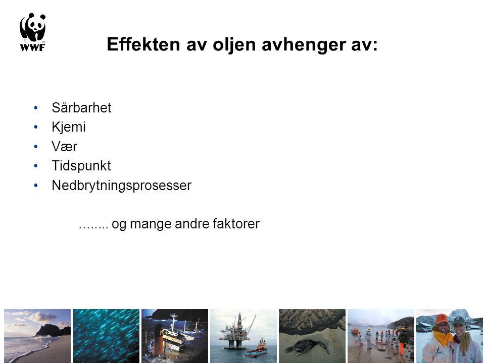 Effekten av oljen avhenger av: