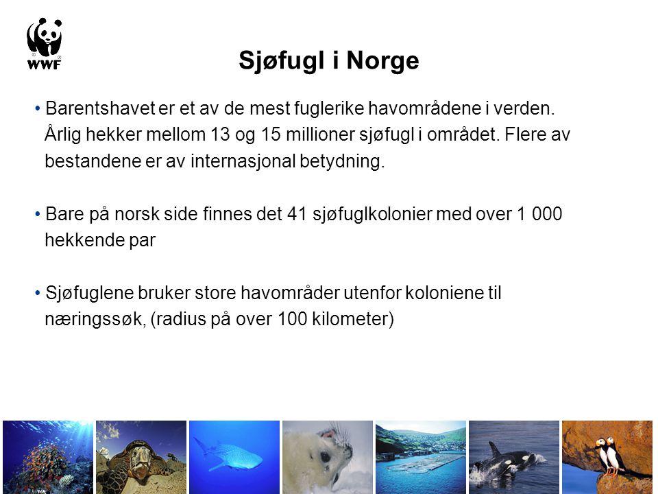 Sjøfugl i Norge Barentshavet er et av de mest fuglerike havområdene i verden. Årlig hekker mellom 13 og 15 millioner sjøfugl i området. Flere av.