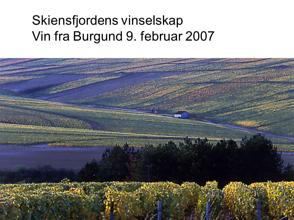 Skiensfjordens vinselskap