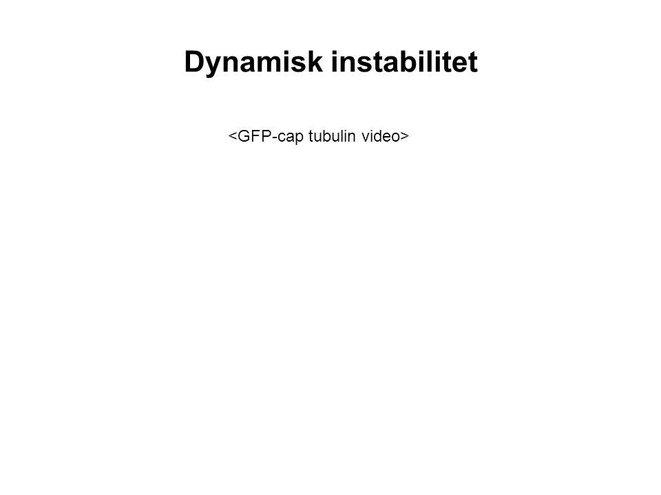 Dynamisk instabilitet