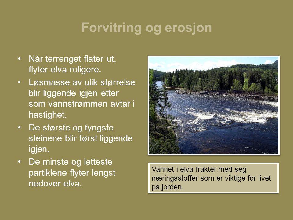 Forvitring og erosjon Når terrenget flater ut, flyter elva roligere.