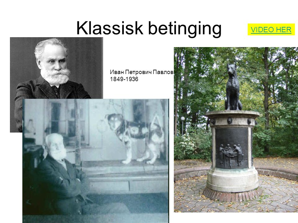 Klassisk betinging VIDEO HER Иван Петрович Павлов 1849-1936