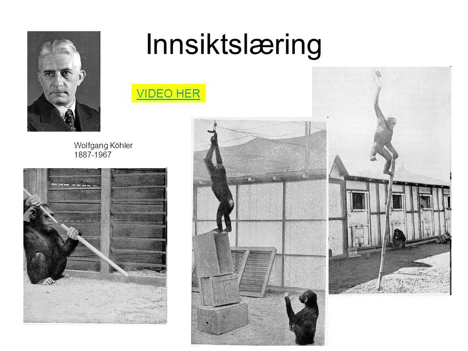 Innsiktslæring VIDEO HER Wolfgang Köhler 1887-1967