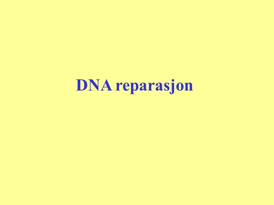 DNA reparasjon
