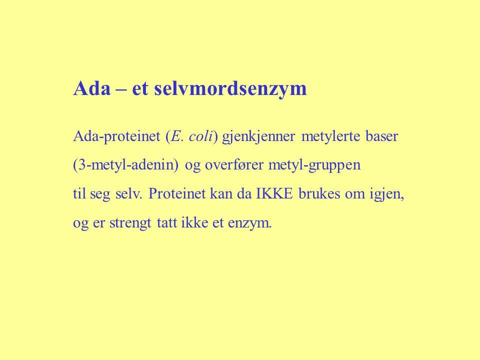 Ada – et selvmordsenzym