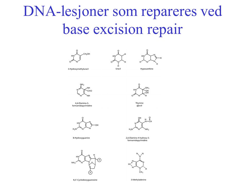 DNA-lesjoner som repareres ved base excision repair