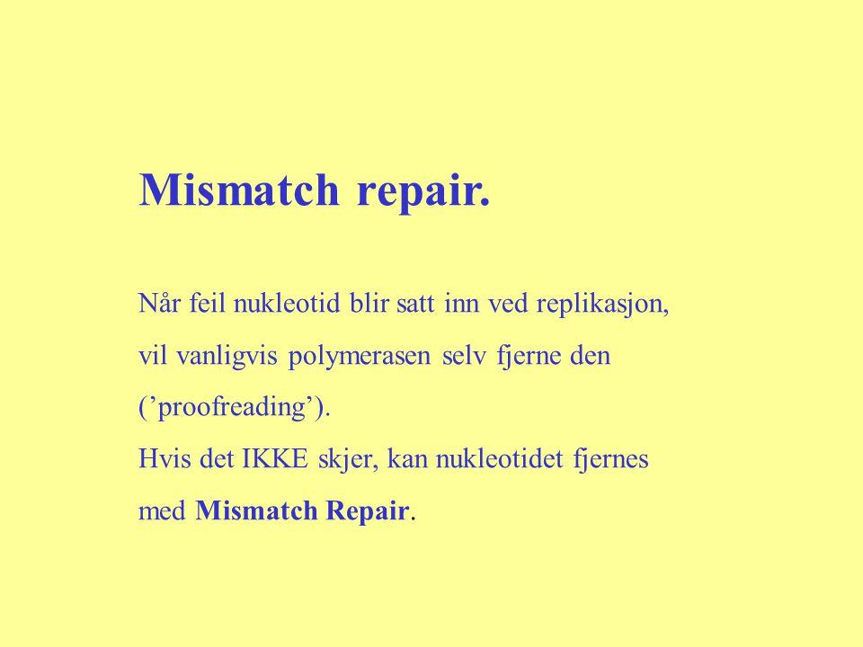 Mismatch repair. Når feil nukleotid blir satt inn ved replikasjon,