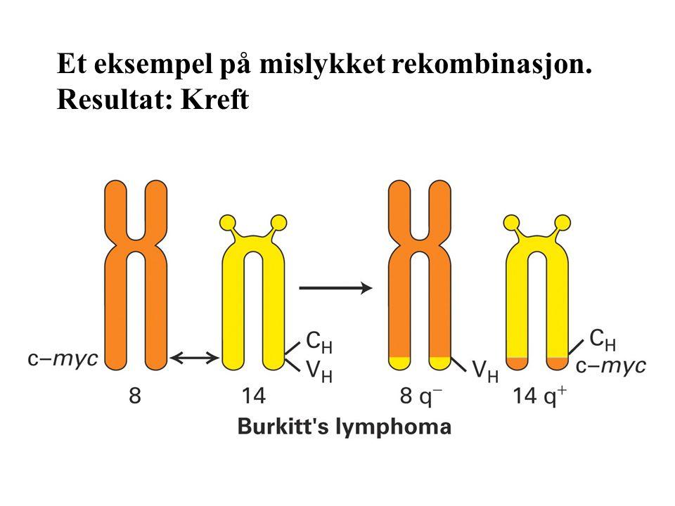 Et eksempel på mislykket rekombinasjon.